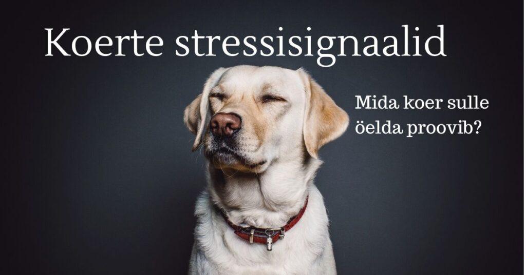Koerte stressisignaalid - kuidas koer oma ebamugavust välhjendab